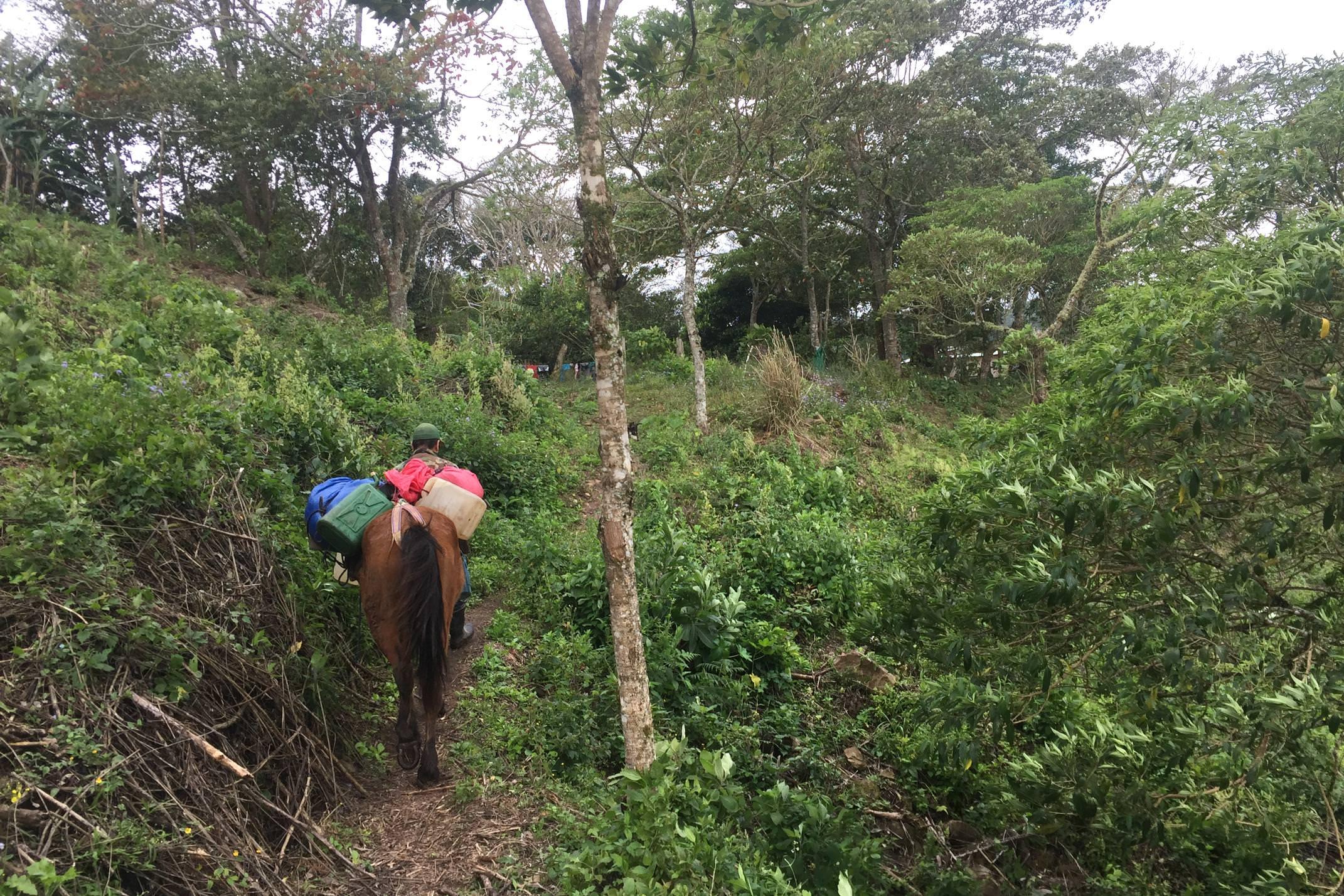 Nicaragua walking in coffee hills copyright Emma Bye Pura