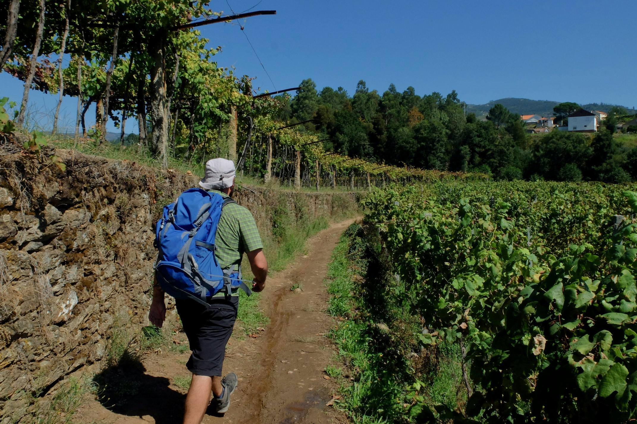Portugal Minho Caminho Caminho Portugues walking through vineyards