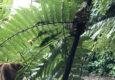 Costa rica tenorio eyelash viper c thomas power pura aventura
