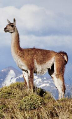 Chile carretera austral parque patagonia c tompkins 1