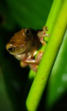 Ecuador amazon frog night walk chris bladon