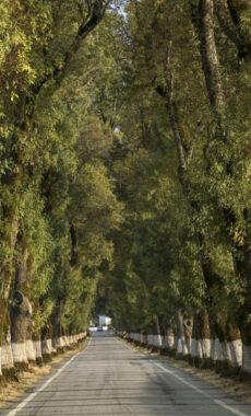 Portugal alentejo marvao road