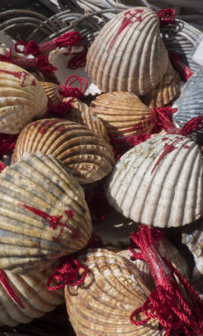 Spain galicia camino shells
