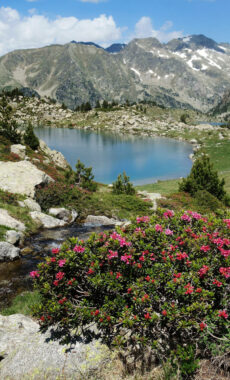 Spain pyrenees catalonia aiguestortes summer roses lake c diego pura