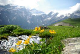 Spain Pyrenees Monte Perdido flowers