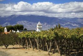 Argentina salta vineyards in cafayate argentina