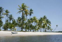 Brazil boipeba canoe on a ocean beach with coconut palms bahia