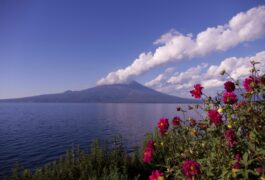 Chile lake district puerto varas lake llanquihue osorno pink flowers