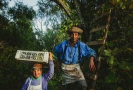 Chile maule valley casa bouchon pickers