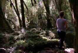 Chile patagonia carretera austral pumalin park cascada forest walk