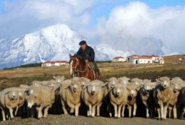 Chile patagonia paine cerro guido horseman gaucho sheep 2 c cerroguido