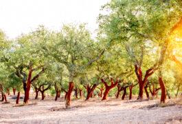 Portugal alentejo cork oaks shutterstock