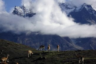 Chile patagonia torres del paine guanacos herding clouds on mountains