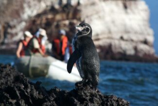 Ecuador galapagos islands penguin zodiac behind mariela islands