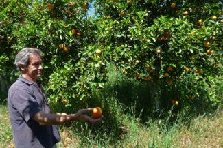 Portugal alentejo evora herdade freixo do meio organic farm visit alfredo c diego pura