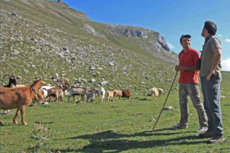 Spain picos shepherds fcq diego