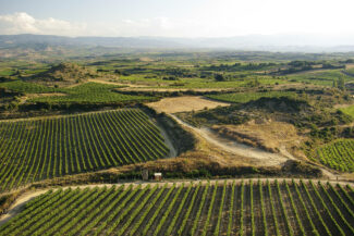 Spain rioja vineyards near Laguardia copyright chris bladon3