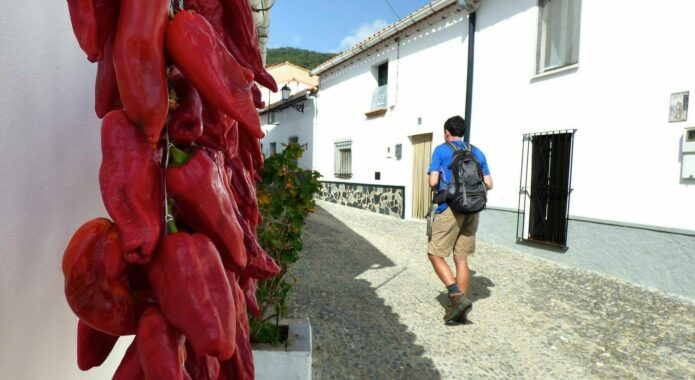 Passing peppers in the hills of Aracena