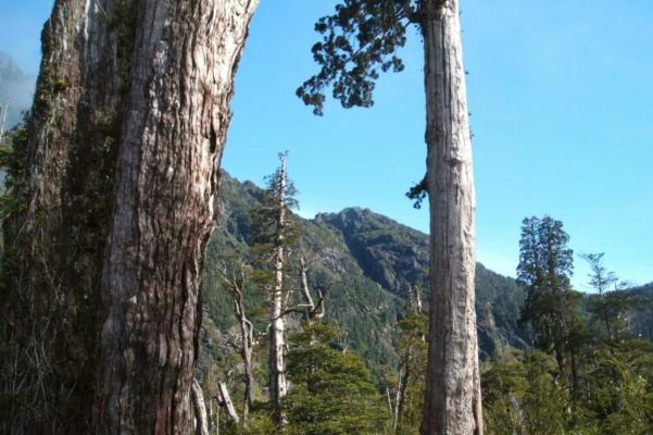 Lake District, Chile