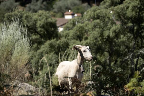 Portugal alentejo marvao galegos hike goat