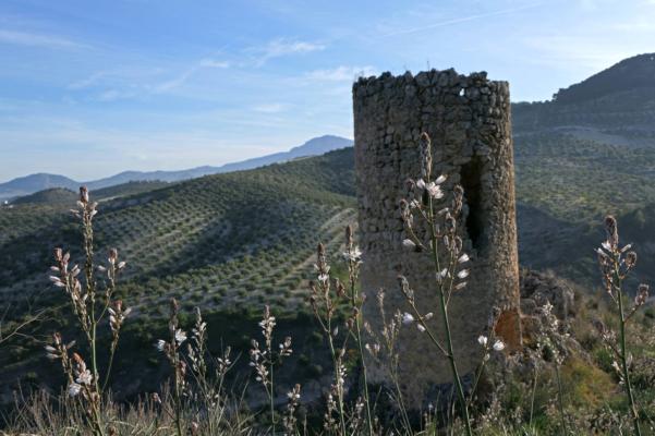 Spain andalucia cordoba subbetica casa olea watchtower asphydel c diego