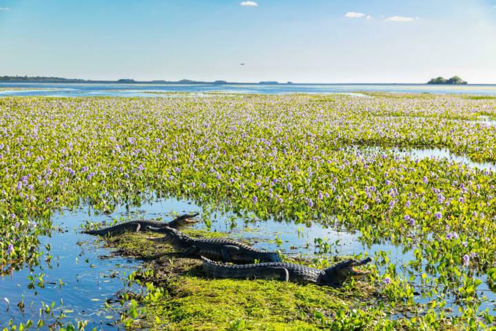 Argentina ibera rewilding wetlands Yacaré Negro c Florian Von Der Fecht