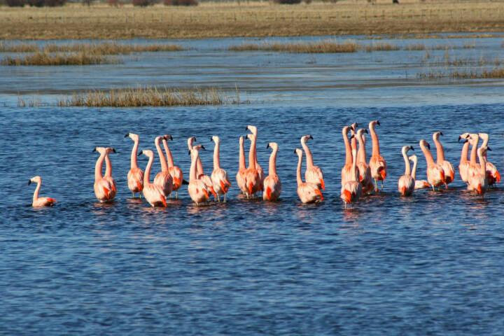 Argentina patagonia ruta 40 chubut flamingoes c jeremy wood