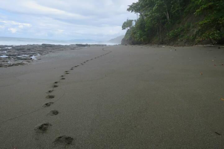 Costa rica matapalo beach c thomas power pura aventura