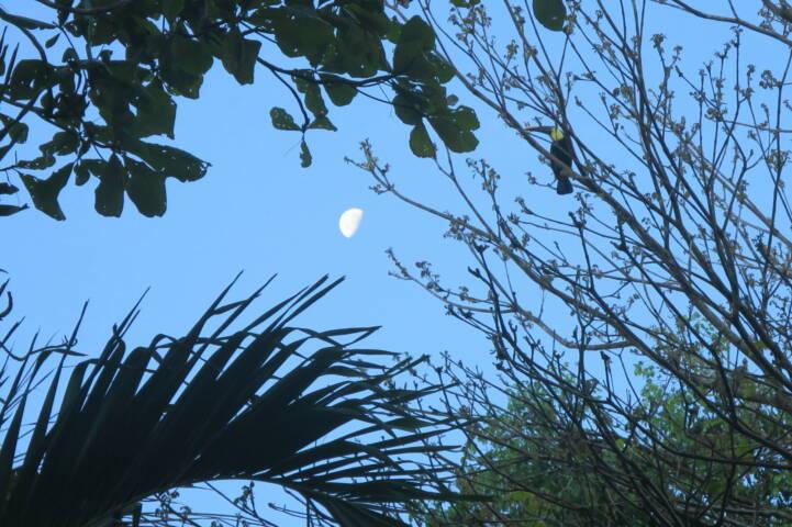 Costa rica matapalo moonlight toucan c thomas power pura aventura