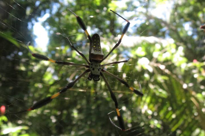 Costa rica osa drake bay spider c thomas power pura aventura