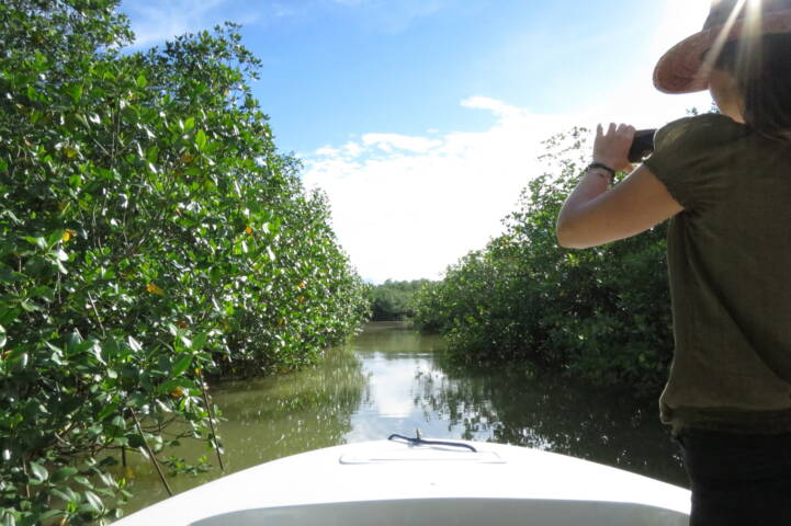 Costa rica osa golfo dulce mangroves c thomas power pura aventura