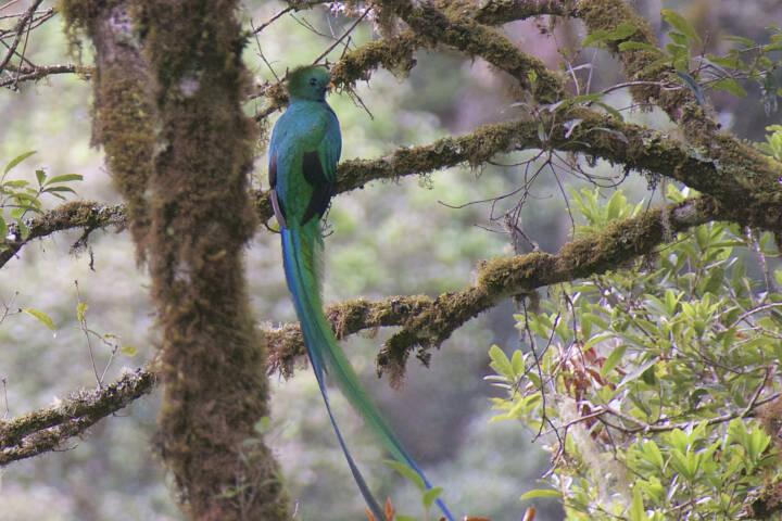 Costa rica san gerardo resplendent quetzal