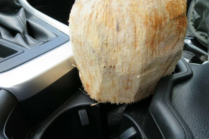 Costa rica tenorio coconut cup holder c thomas power pura aventura