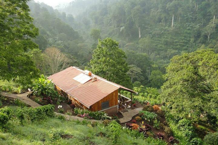 Nicaragua jinotega cloudforest bastilla lodge c vapues