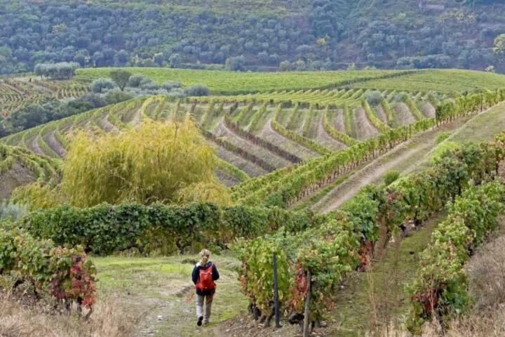 Portugal douro loivos pinhao hike seven