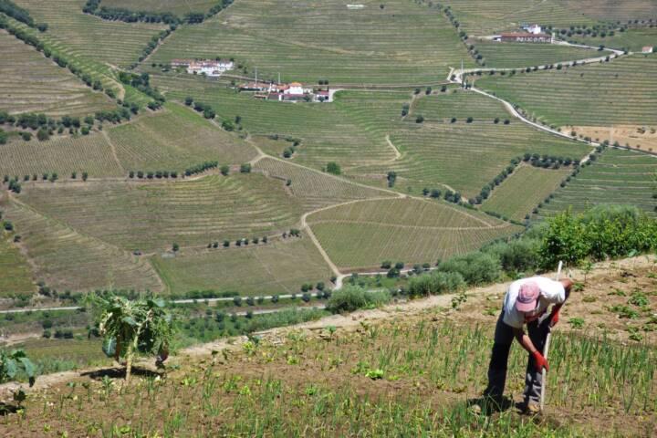 Portugal douro poços paulo farm worker c diego pura