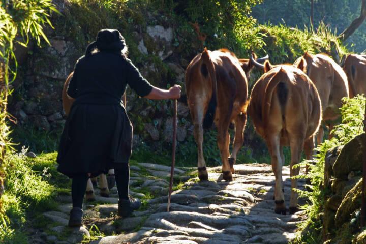 Portugal peneda hiking sistelo padrao farmer cows c diego