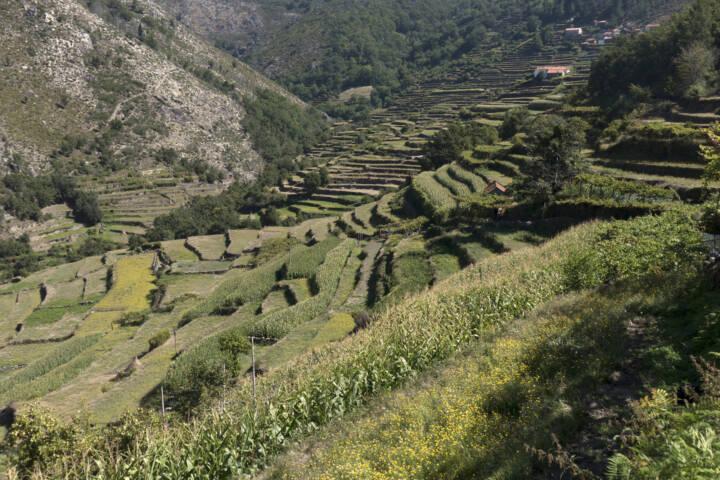 Portugal minho sistelo terraces 3 c diego pura