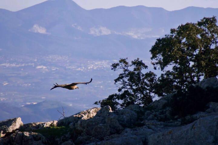 Spain andalucia sierra subbetica copyright pura aventura thomas power torcal de antequera gryphon vulture