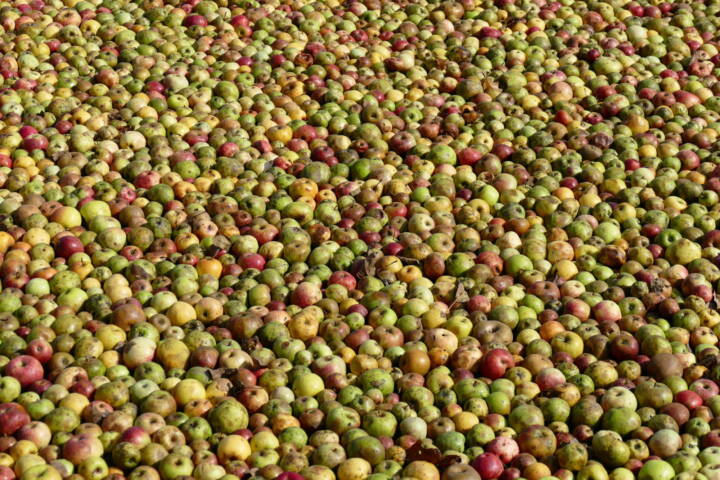 Spain basque country apples for cider