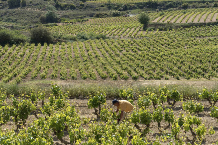 Spain rioja villabuena luis cañas winery vineyards worker c dmartin