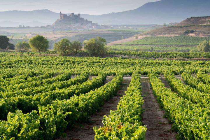 Spain rioja vineyard and san vicente de la sonsierra as background la rioja