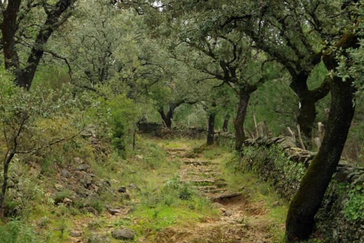 Spain andalucia alajar linares walk copyright chris bladon 4