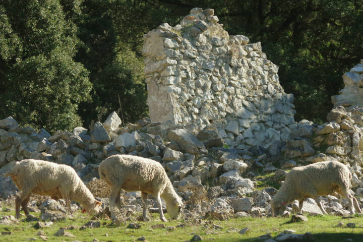 Spain andalucia sheep cortijo zuheros walk copyright chris bladon pura aventura