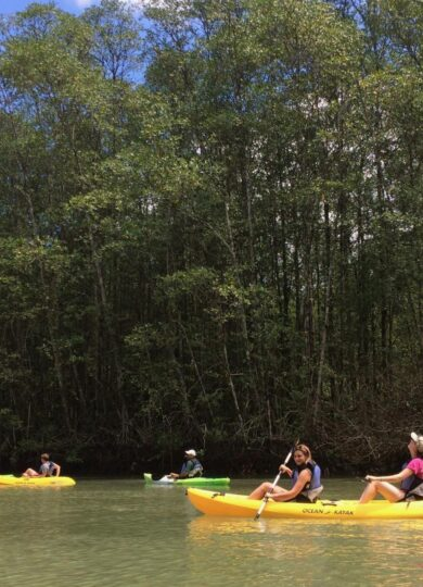 Costa rica osa peninsula golfo dulce kayak mangroves