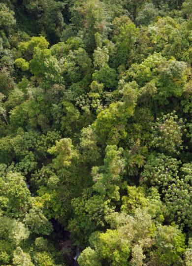 Ecuador mindo cloud forest canopy chris bladon