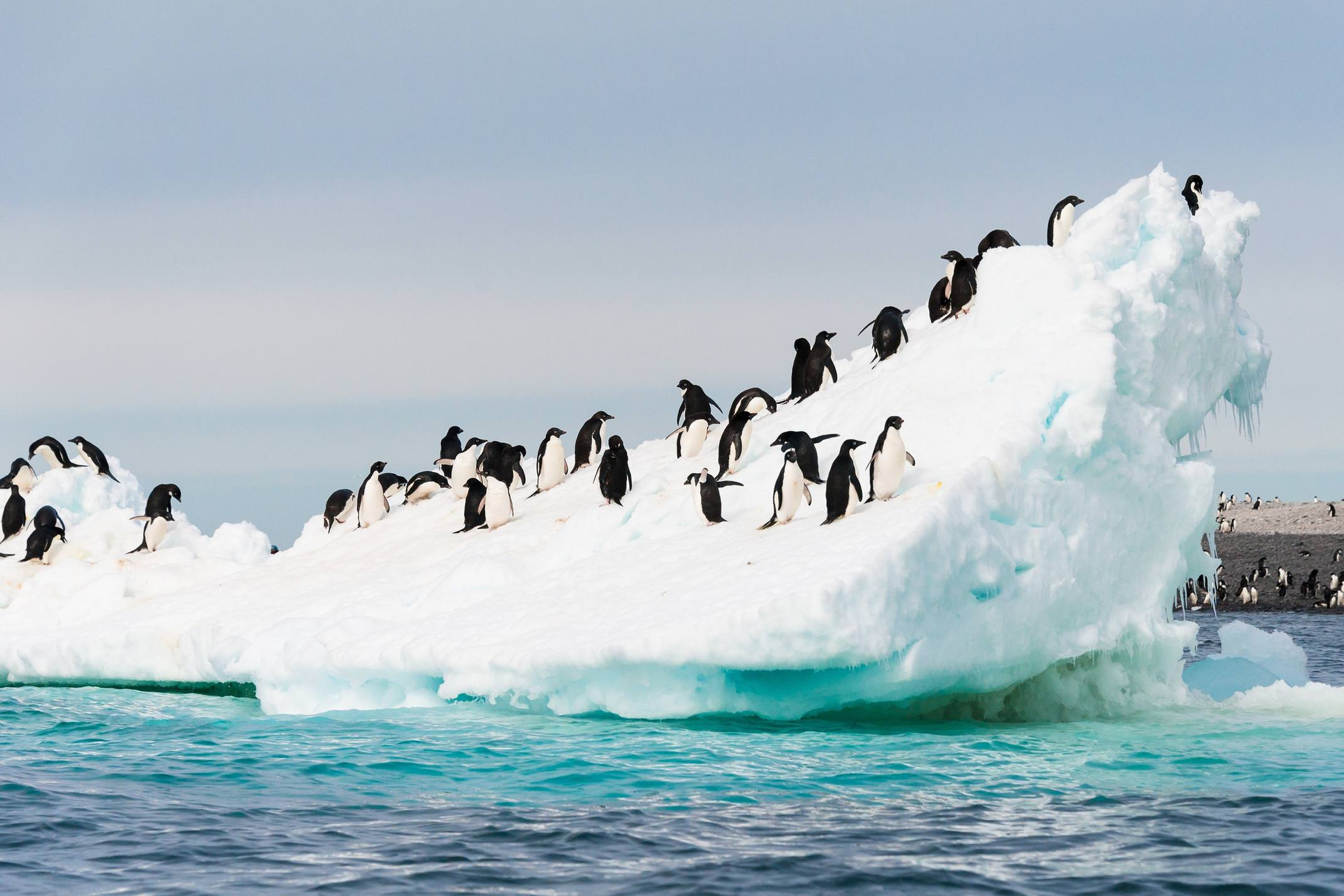 Antarctica penguins on iceberg