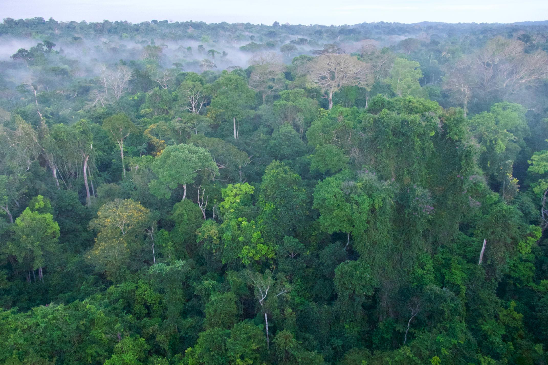 Brazil amazon cristalino lodge early light on forest canopy copyright thomas power pura aventura
