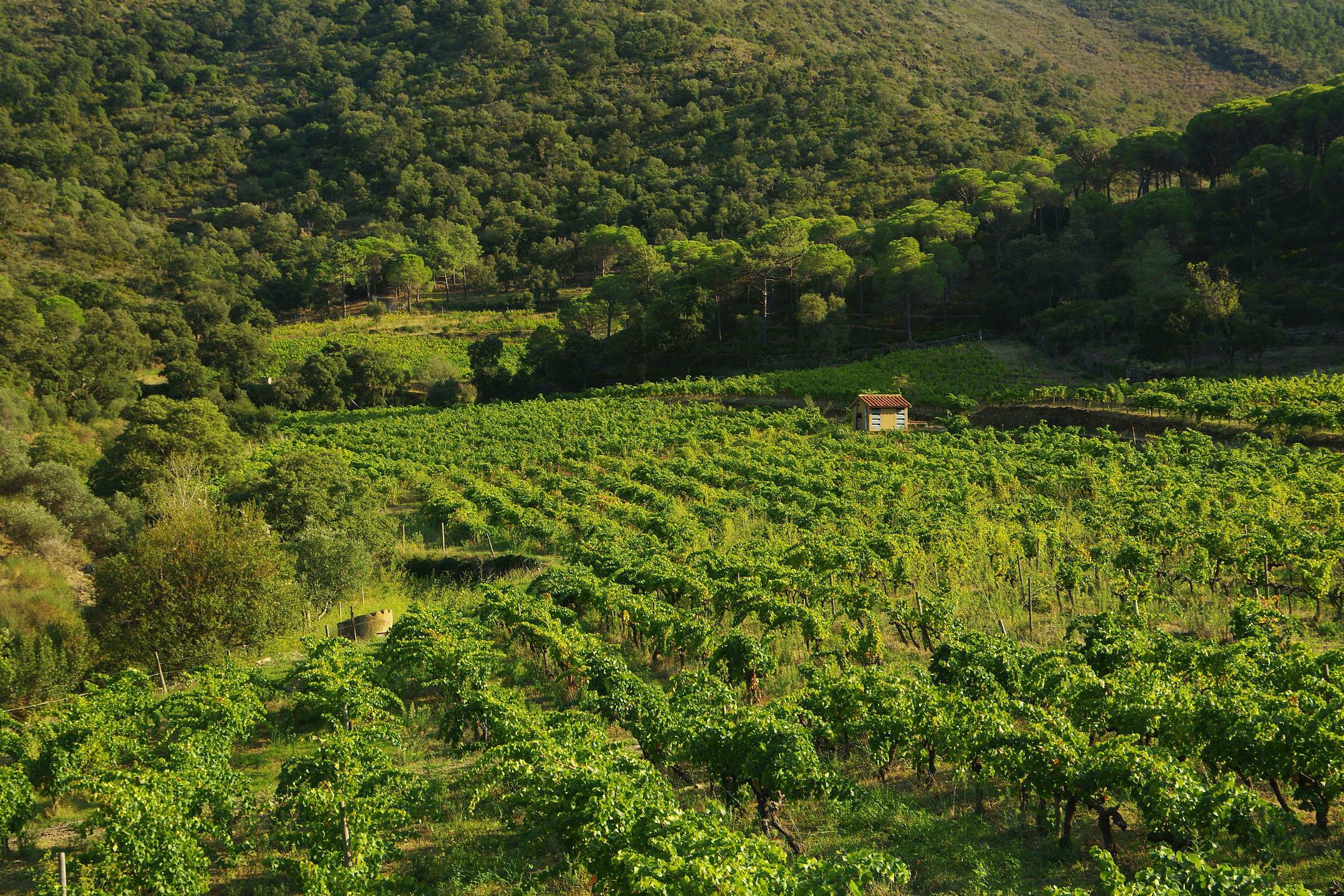 Wine tasting, Catalonia
