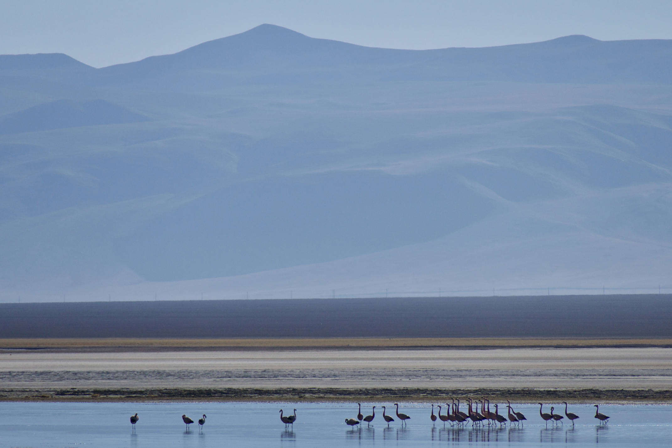 Chile atacama copiapo santa rosa lagoon flamingos c tom power
